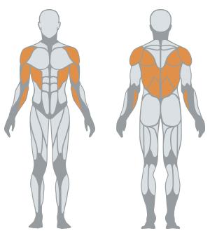 http://www.panattasport.com/resources/products/1fe001/muscoli.jpg