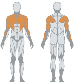 http://www.panattasport.com/resources/products/1fe034/muscoli.jpg