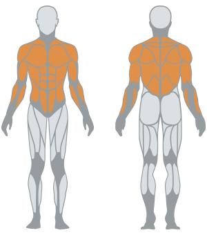 http://www.panattasport.com/resources/products/1fe111/muscoli.jpg