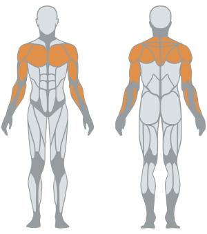 http://www.panattasport.com/resources/products/1fe202/muscoli.jpg
