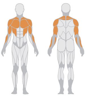 muscoli.jpg